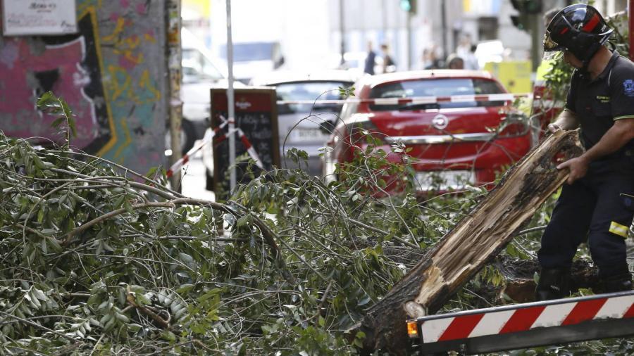Ecologia Ecologia De Botella a Carmena: Madrid tala en los dos últimos años 6.500 árboles de riesgo.